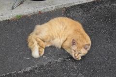 iyo_cat