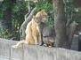 sanuki_cat