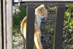 tosa_cat
