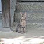 第七十五番 善通寺近くの神社